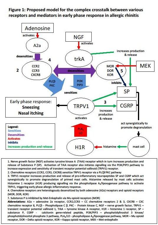 Figure 1 receptors and mediators
